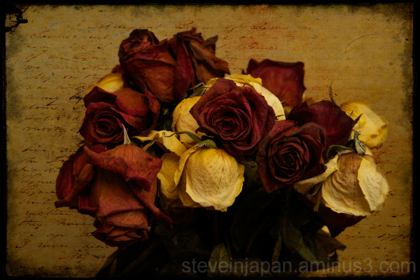 Roses past their prime that became art.