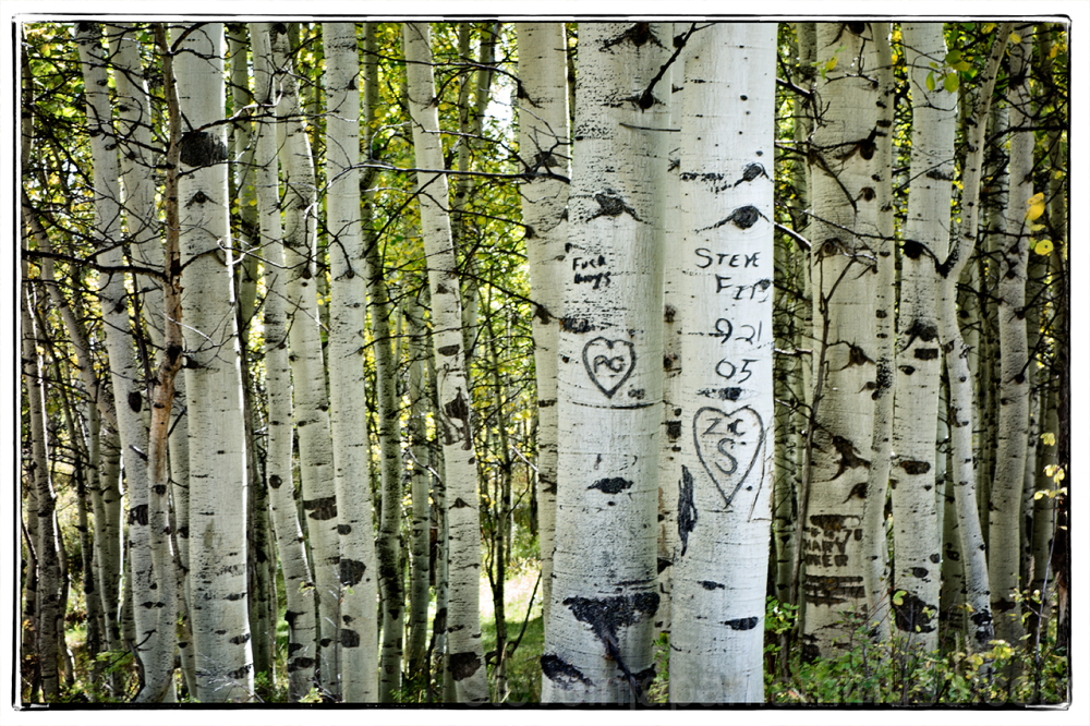 Aspen, near Sundance, in a mountain canyon.