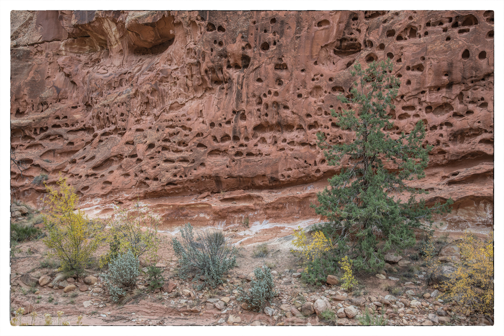 Rock formations in Capitol Reef NP.