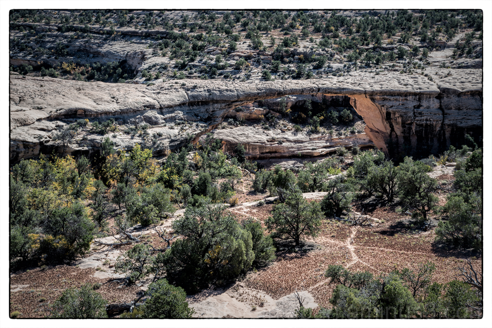 Owachomo natural bridge in Natural Bridges NM.