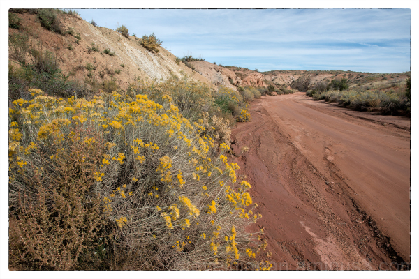 The road to Klondike Bluffs in Arches NP.