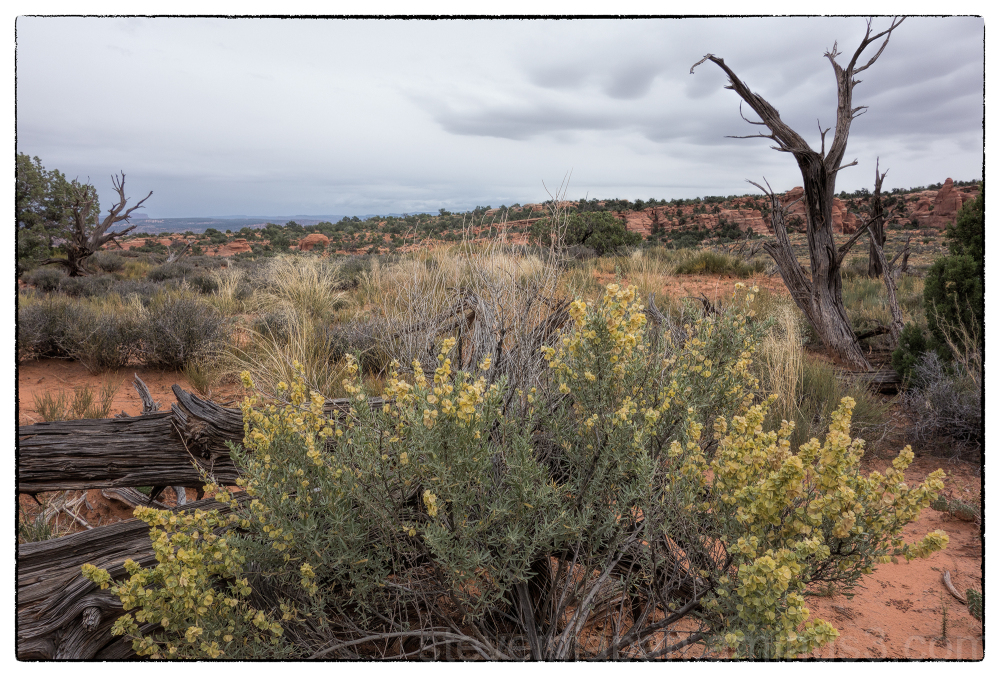 A desert arrangement in Arches NP.