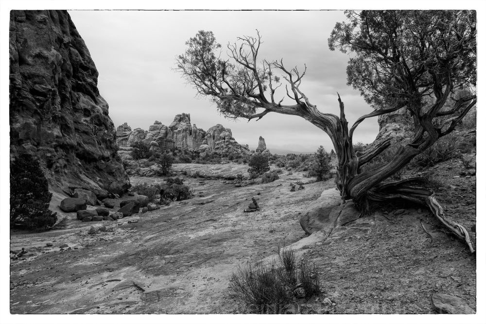 A big juniper in Arches National Park.