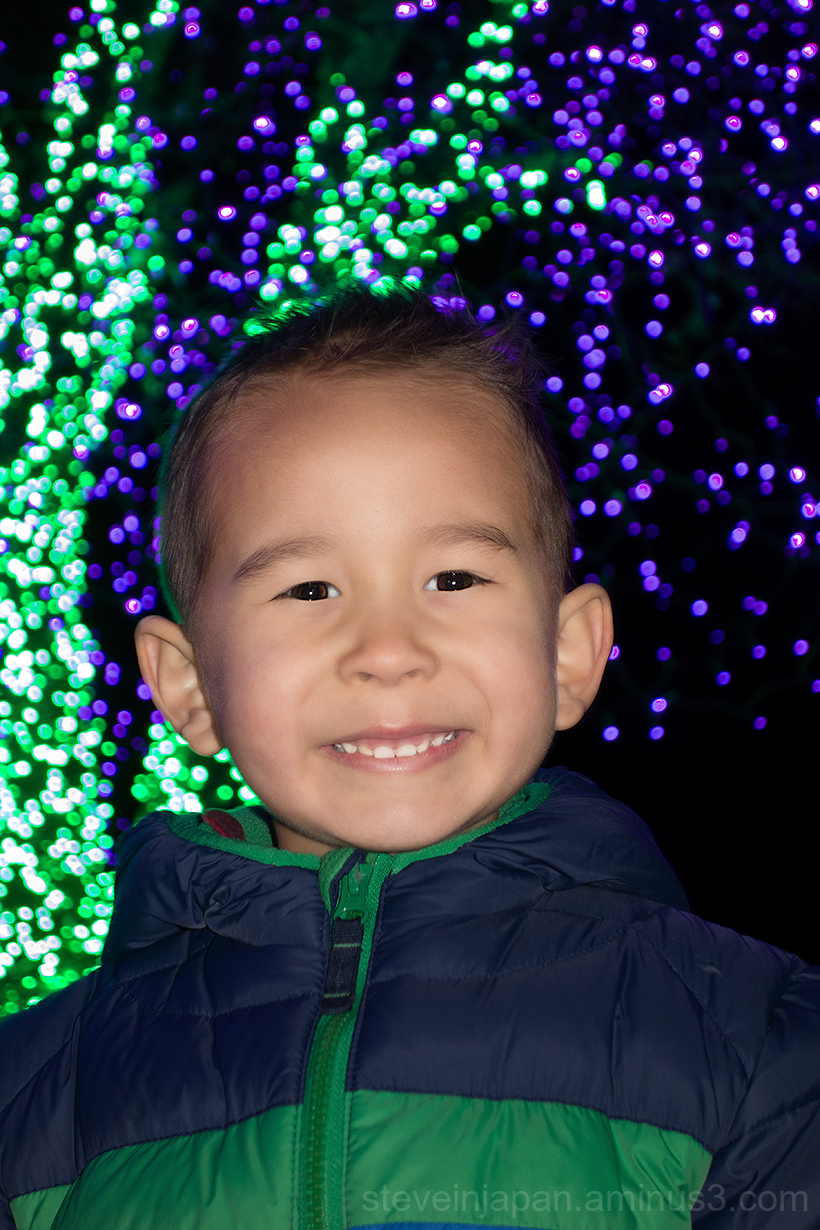 Lights at the Point Defiance Zoo in Tacoma, WA.