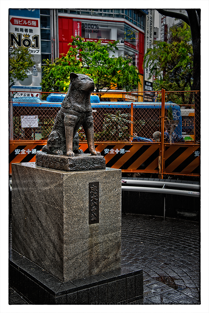 The Hachiko statue at Shibuya Station.