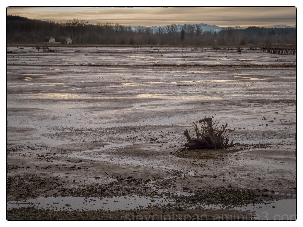 Low tide at Nisqually Wildlife Refuge.