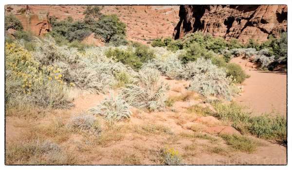 Red Sands Trail in Snow Canyon State Park, Utah.