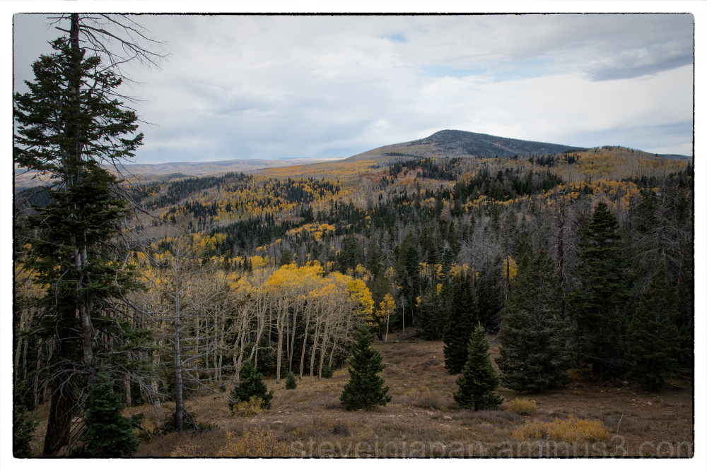 Aspens along Utah Route 14.