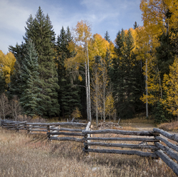 Fence and Aspens