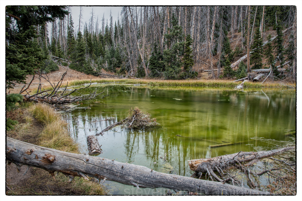 Alpine Pond trail at Cedar Breaks NM.