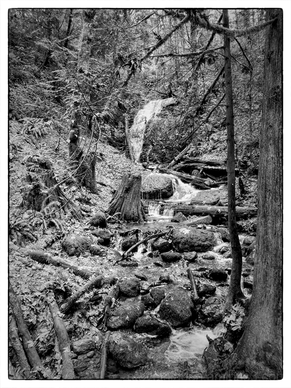 On the trail to Coal Creek Falls.