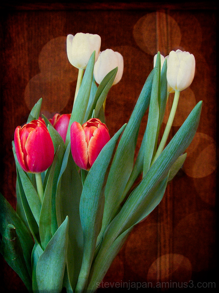 Tulips in the kitchen.