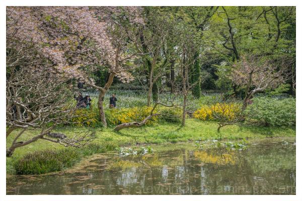 On the Pond's Edge