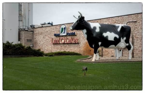 A big cow in Sioux Falls, South Dakota.