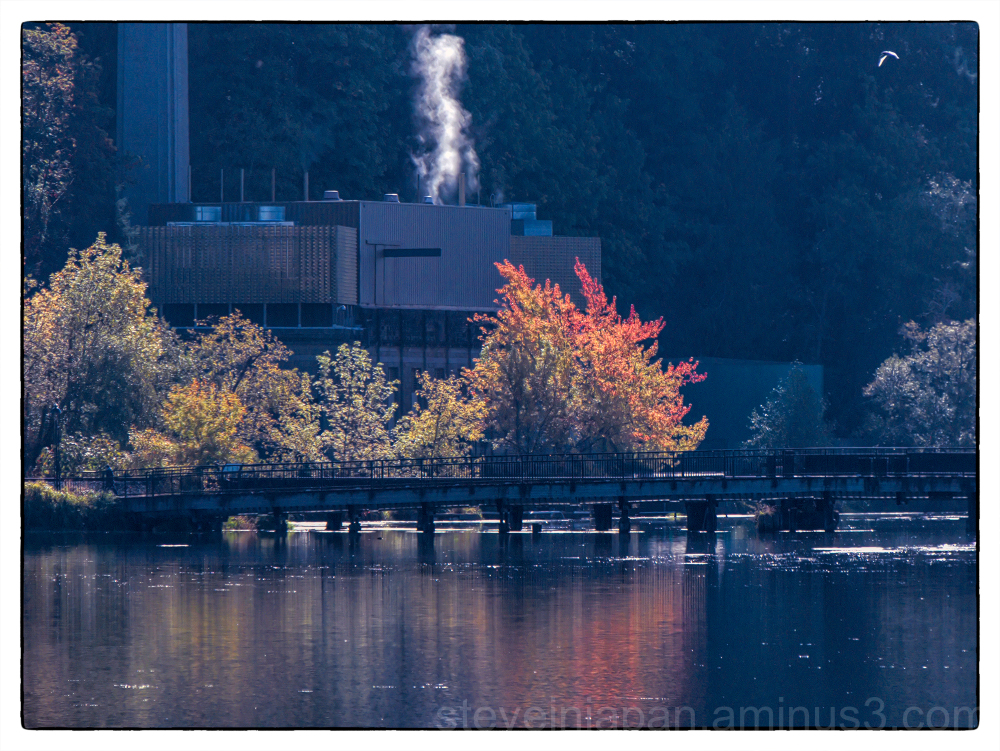 Pleasant days of autumn in Olympia, WA.