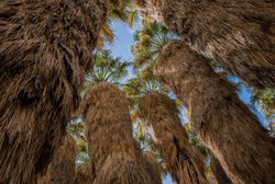 Under the Palms