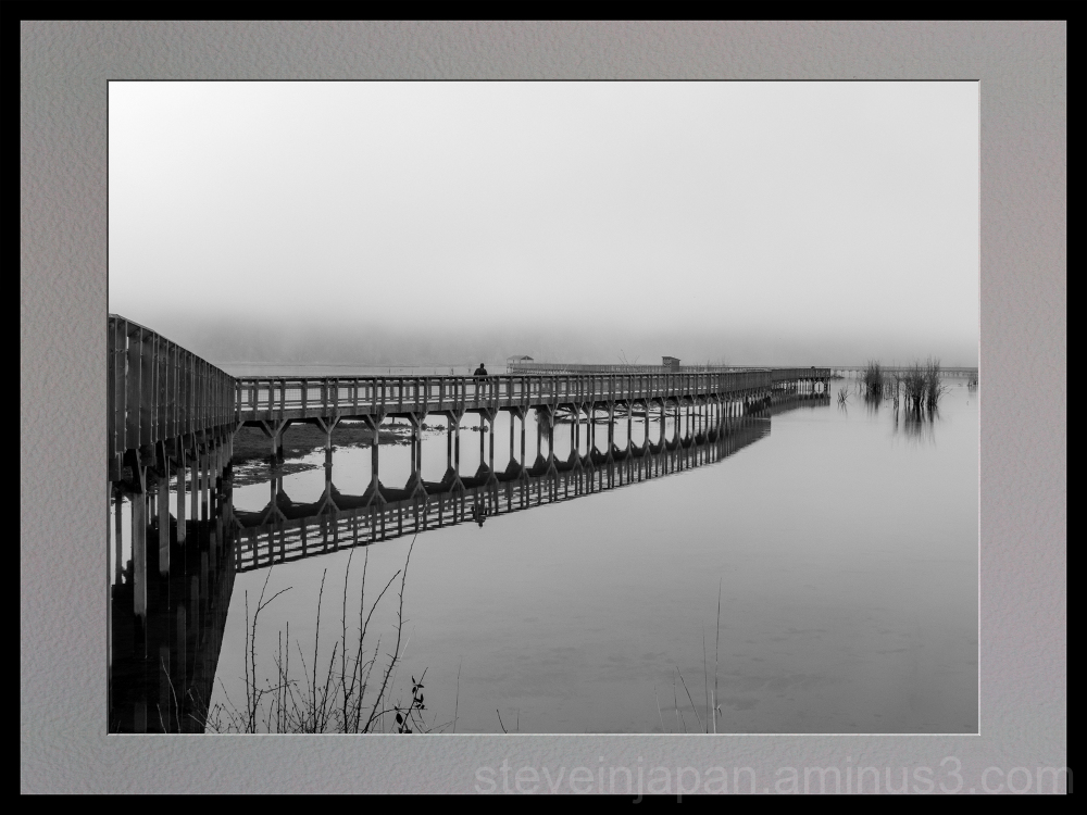 The boardwalk at Nisqually Wildlife Refuge.