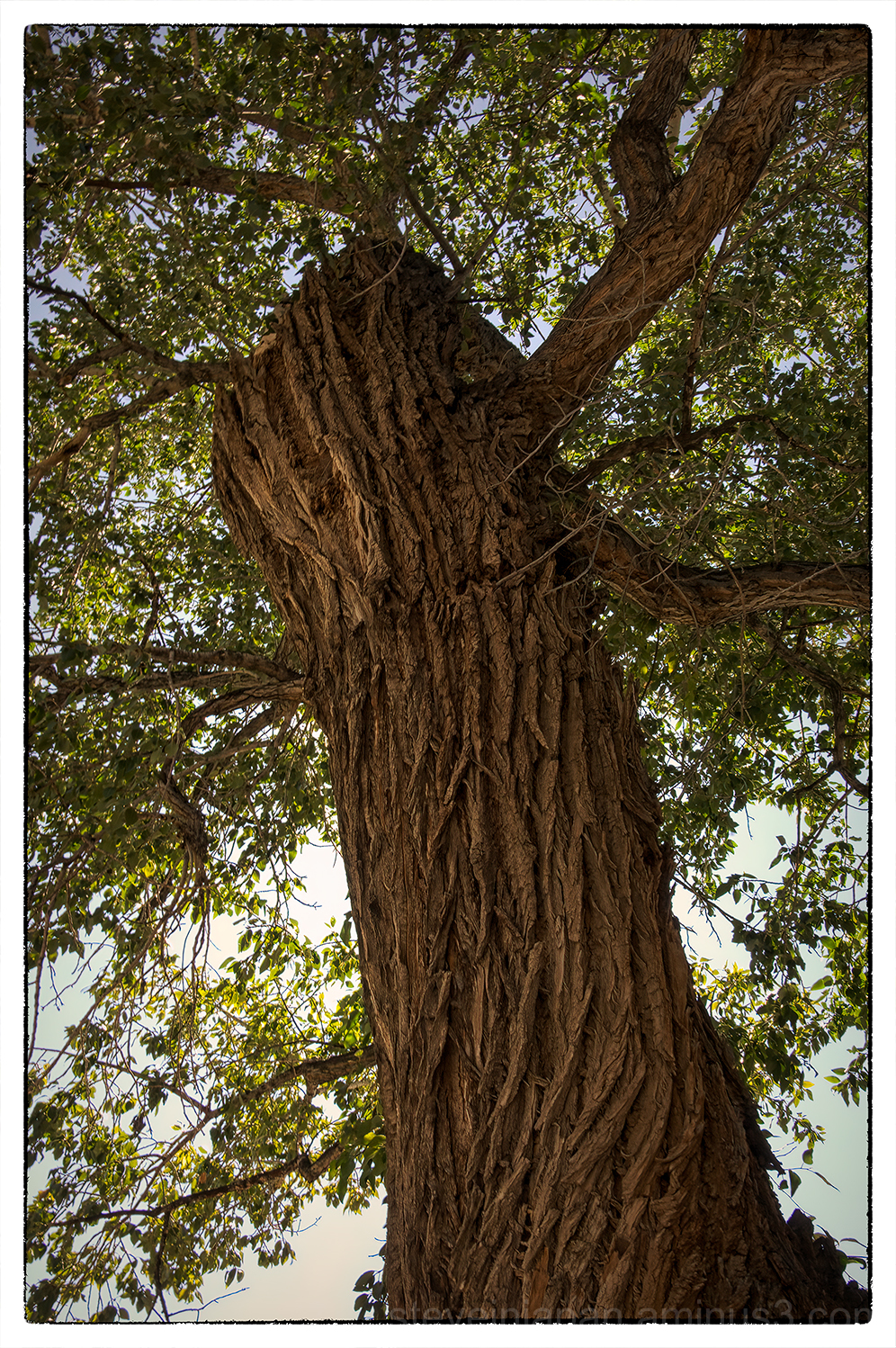 A tree in Taos, New Mexico.