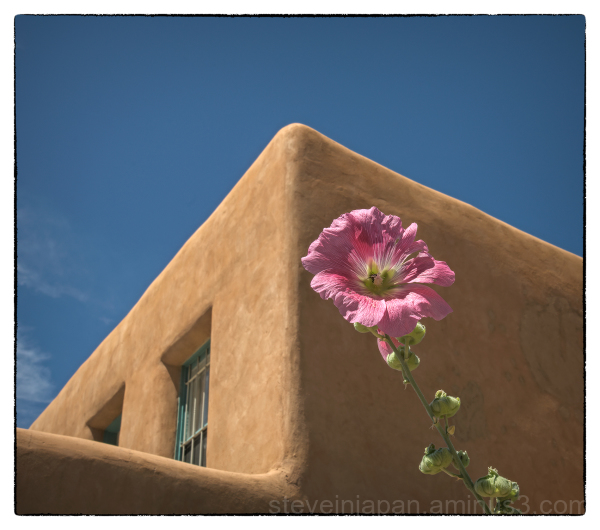 A house & flower in Taos, New Mexico.