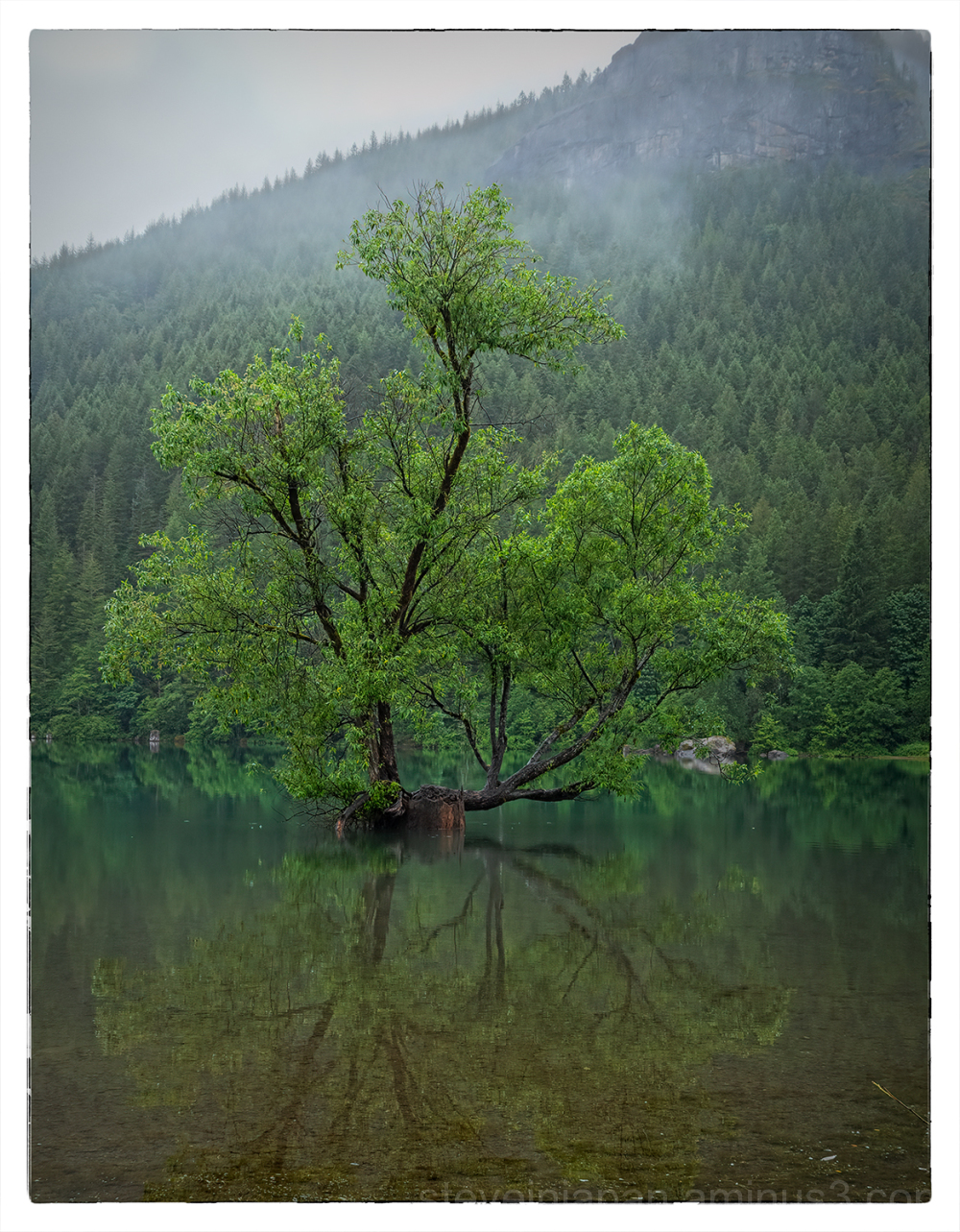 A tree reflected in Rattlesnake Lake.