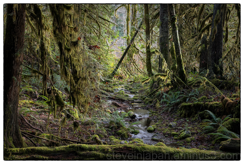 A winter hike on the Olympic Peninsula.