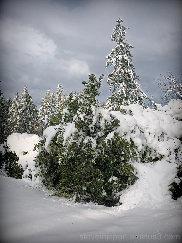 A snowy day in Olympia, Washington.