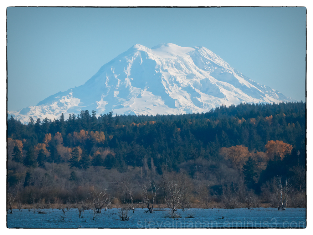 Mount rainier from the Nisqually delta.