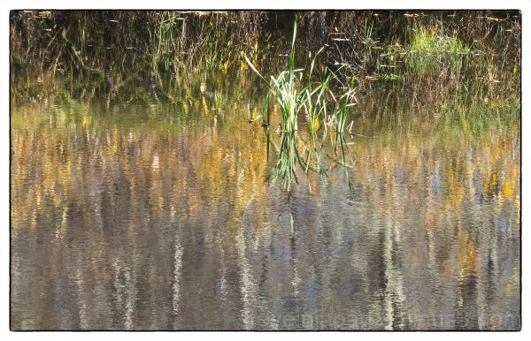 Reflections at the Nisqually delta.