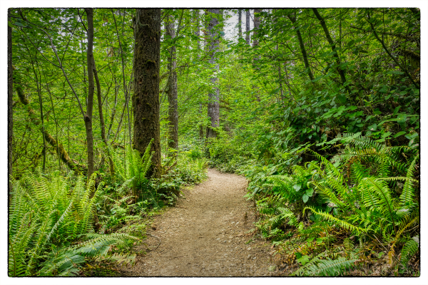 A hike on the Mima Falls Loop Trail.