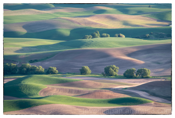 A pattern shot from Steptoe Butte in the Palouse.