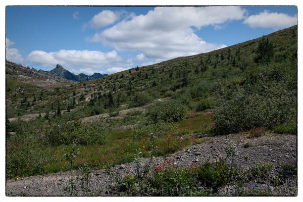 Harry's Ridge at Mount Saint Helens.