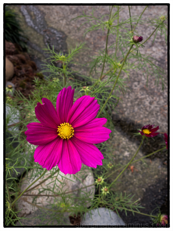 Flowers found on walks.