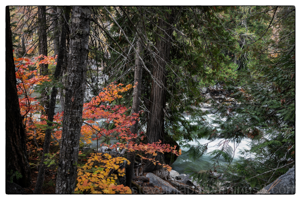 Autumn colors in Tumwater Canyon.