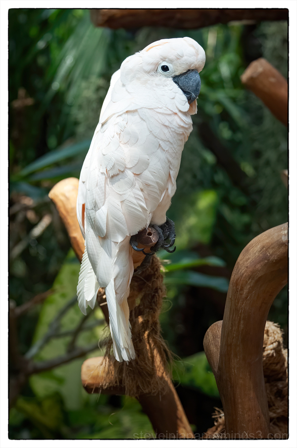 Birds at the Jurong Bird Park in Singapore.