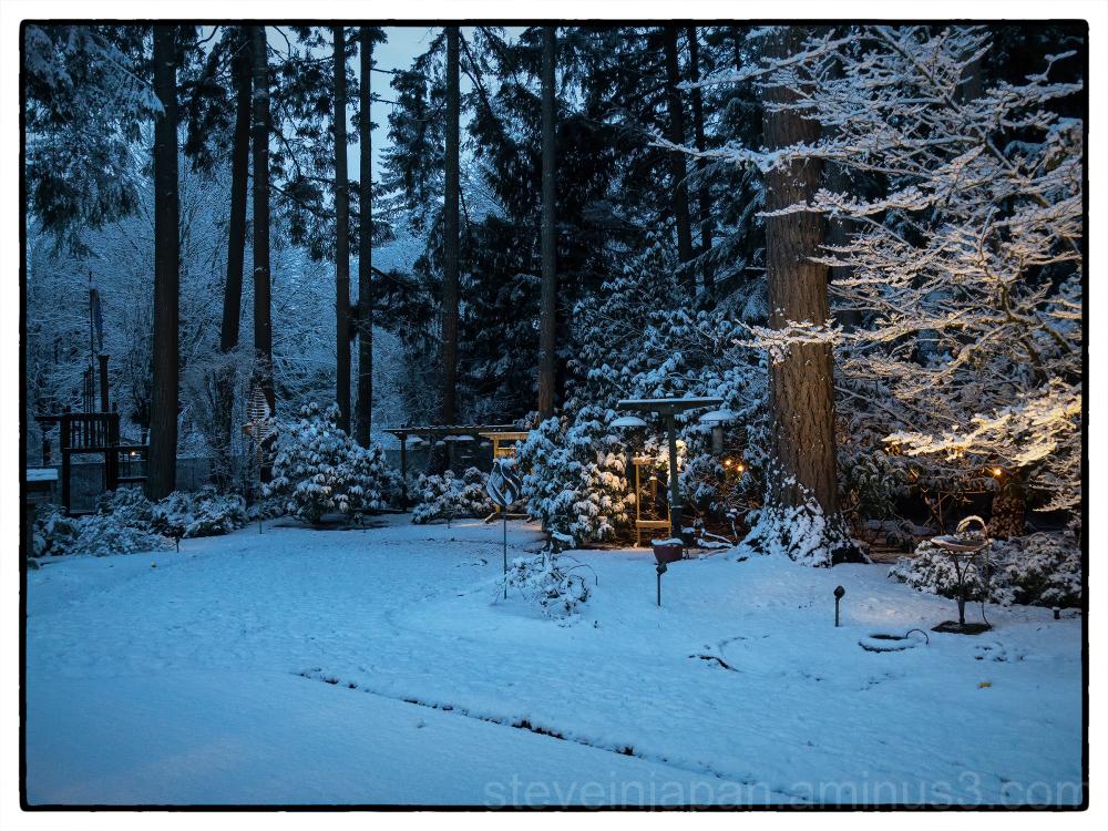 Winter in Olympia.