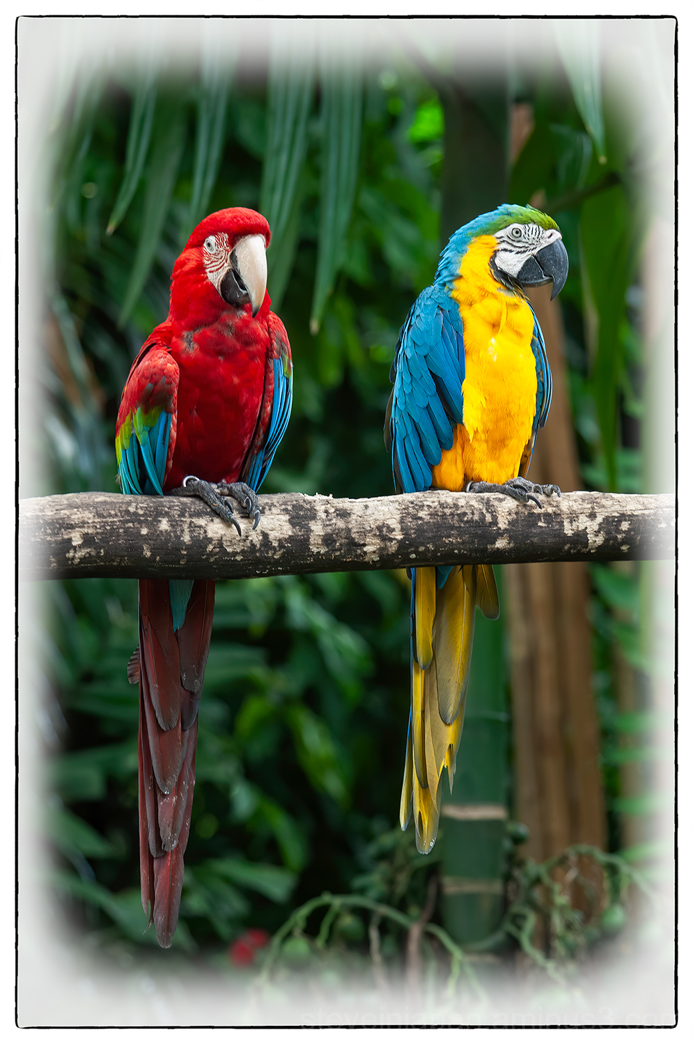 Birds at the Jurong Bird Park in Singapore.