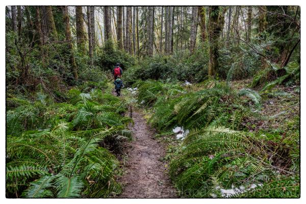 Guillemot Cove hike in Washington State, USA.