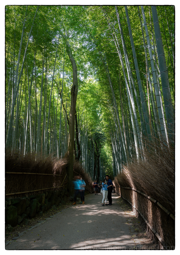 Arashiyama in the western part of Kyoto, Japan.