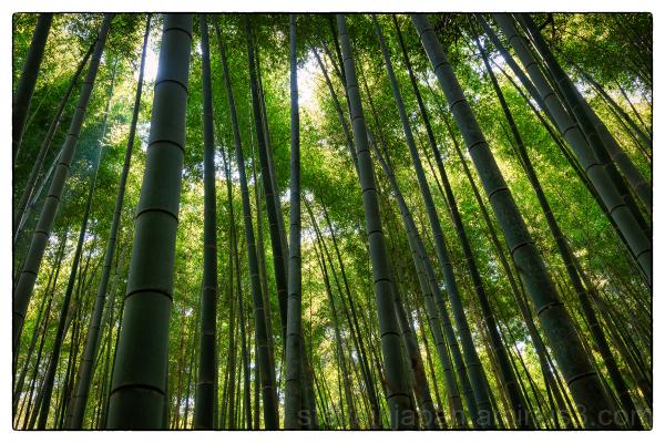 Arashiyama in the western part of Kyoto, Japan.