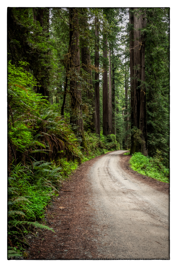 Redwood National & State Parks in California.