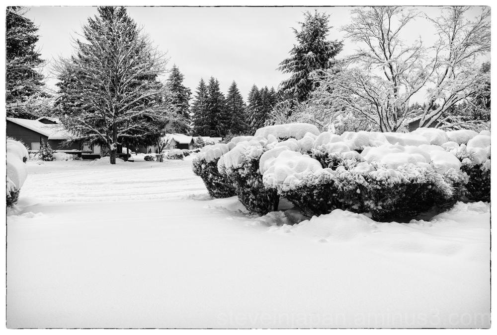 Snow in Olympia, WA.