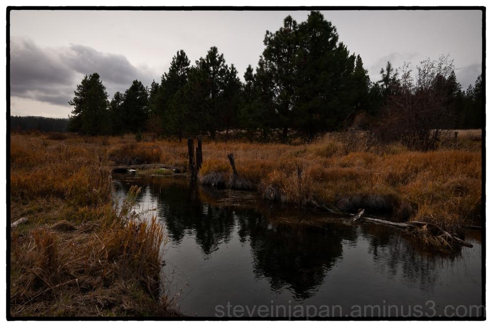 A wetland at Conboy Lake National Wildlife Refuge.