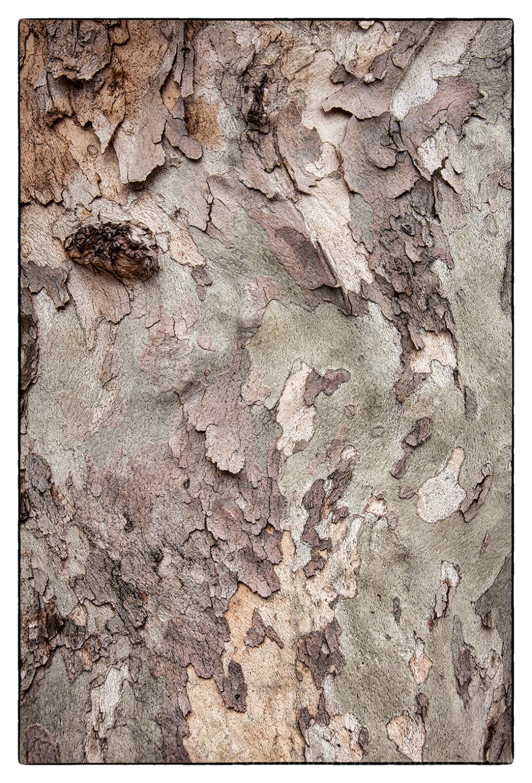 Tree bark in Sedona, AZ.