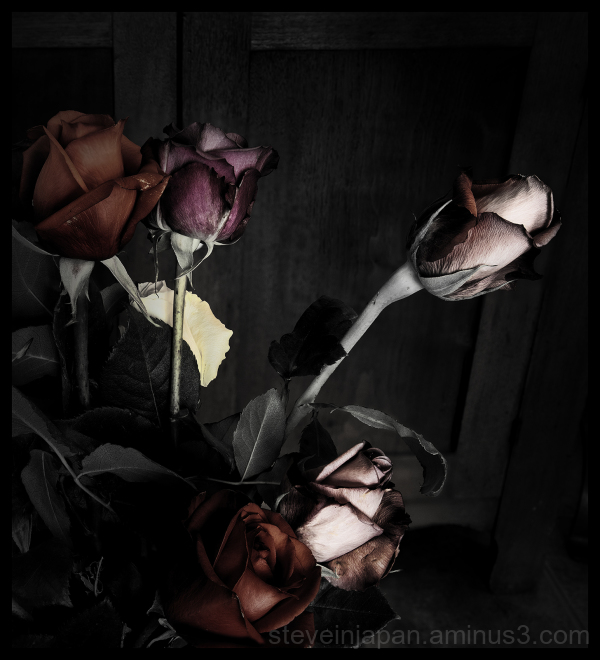 Roses party after dark.