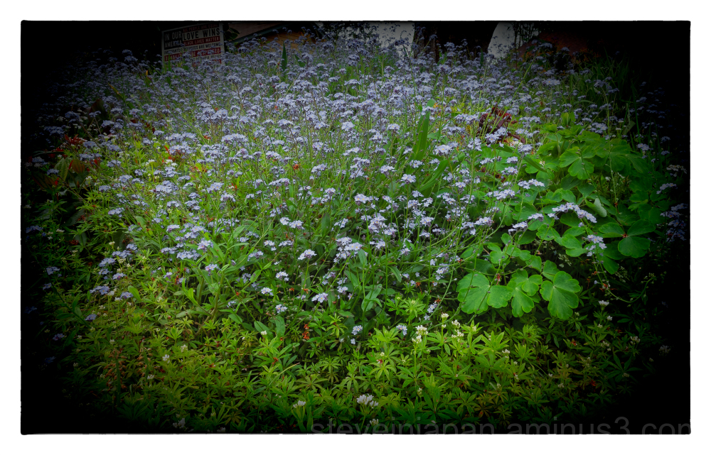 Blue flowers in the neighbor's garden.