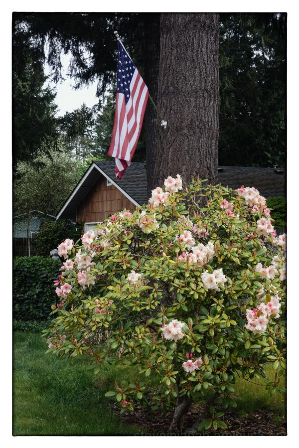 A flag seen on a walk.