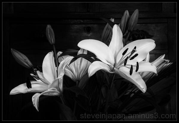 A lily bouquet in B&W.