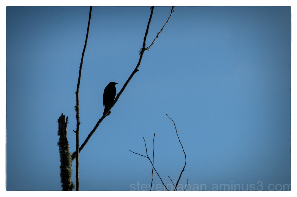 A walk at the Nisqually Wildlife Refuge.