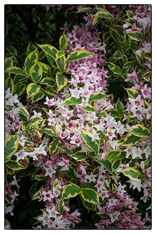 olympia washington flowers