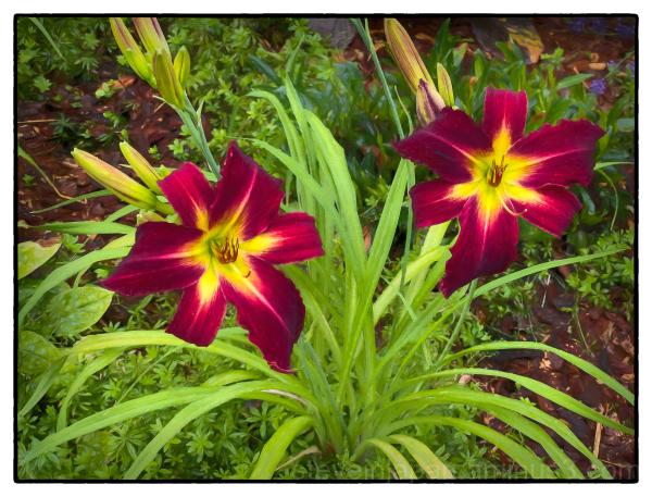 Flowers seen on a walk.